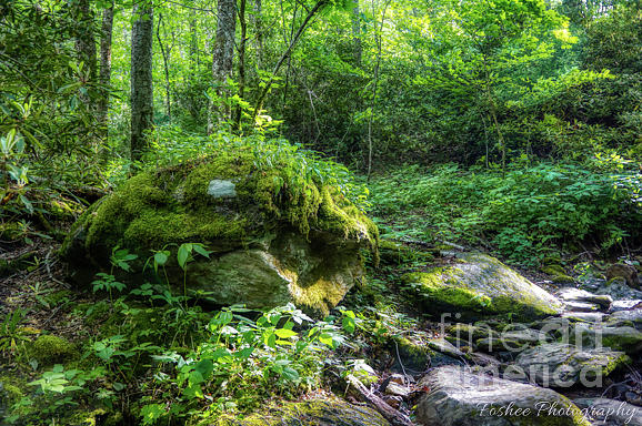 Landscape Photograph - Mossy Rock by James Foshee