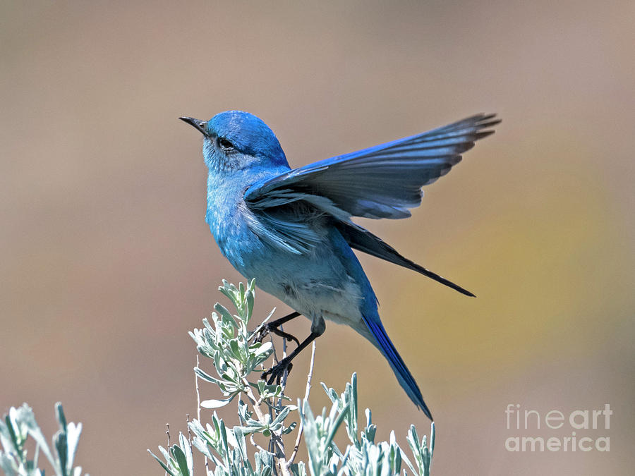 Mountain Blue Landing by Mike Dawson