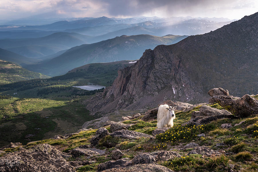 A Mountain Goat's View by Richard Raul Photography