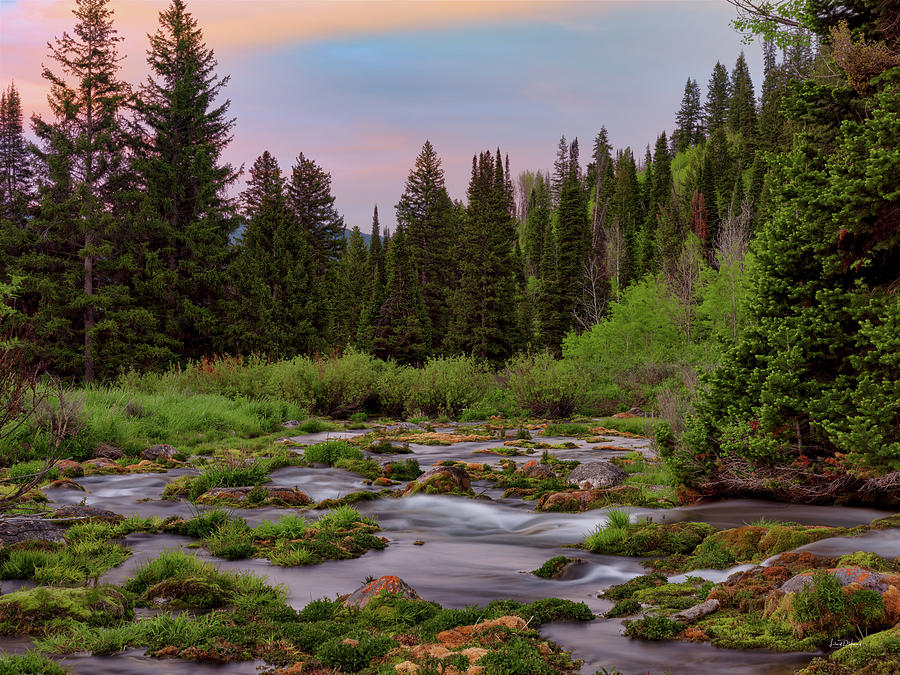 Nature Photograph - Mountain Spring by Leland D Howard