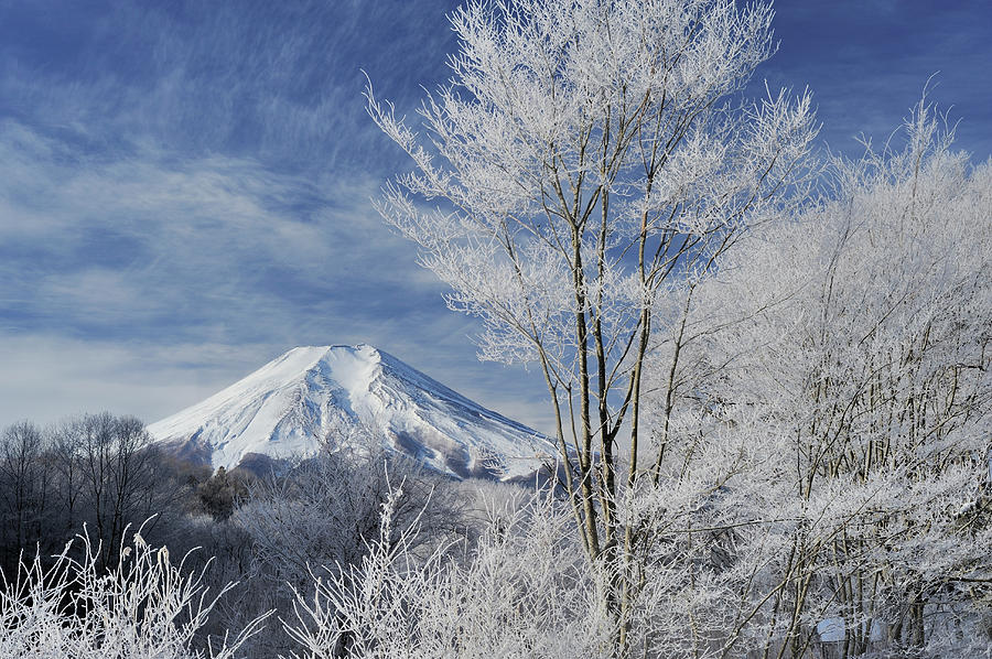 Mt. Fuji And Frost-covered Trees Photograph by Toyofumi Mori