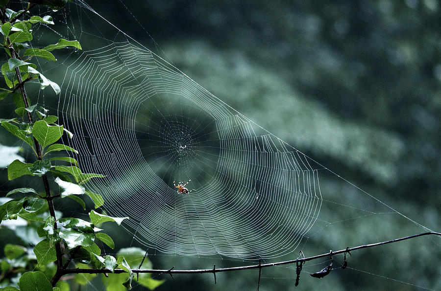 My Web by Paul Ross