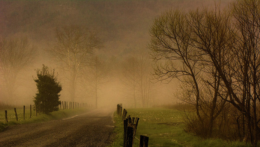 Mysterious Morning by Marcy Wielfaert