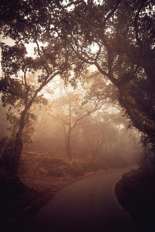 Road Photograph - Mystical Road Towards The Palacio De Regaleira With Fog by Cavan Images