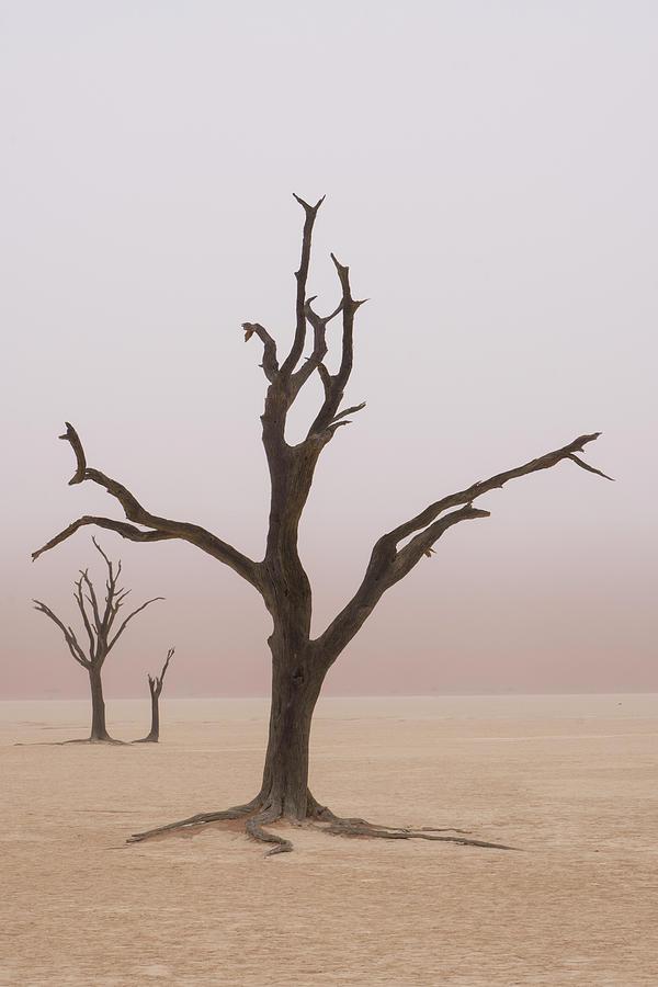 Africa Photograph - Namibia Fog Shrouds The Dead Acacia by Brenda Tharp