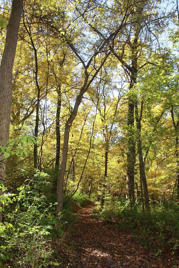 Nature Trail Photograph