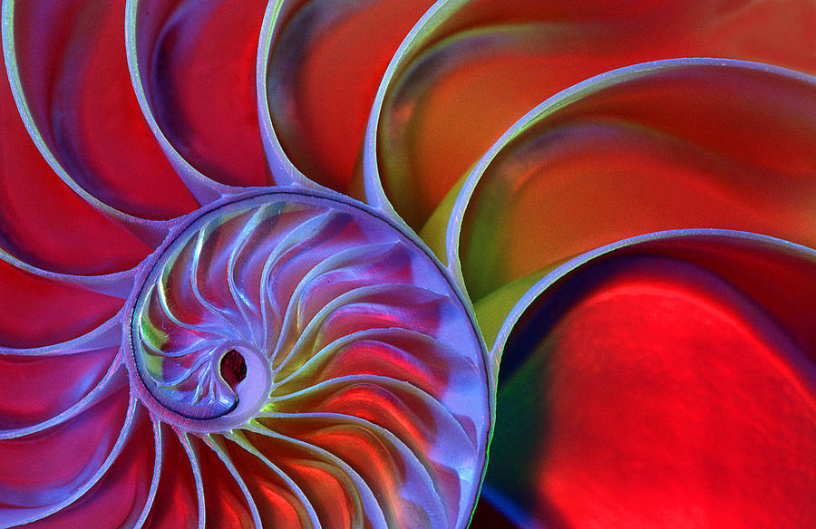 Nautilus Shell Photograph by James L Amos