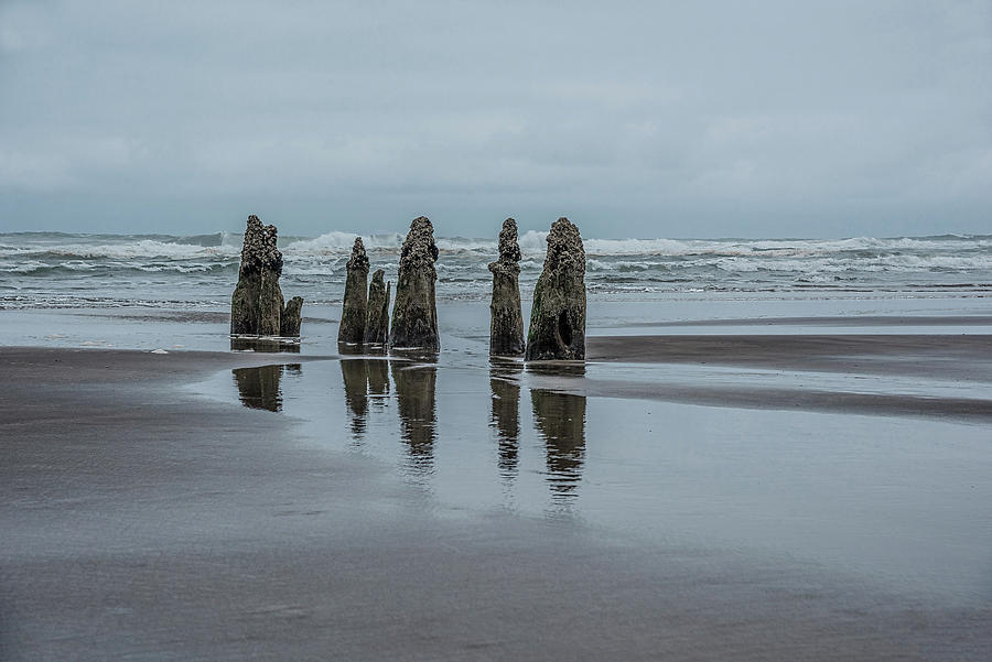 Neskowin Ghost Forest by Johanna Froese