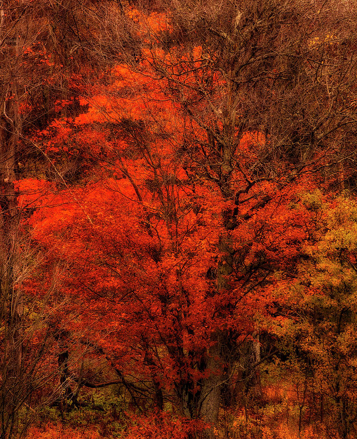 November Dream by Irwin Barrett