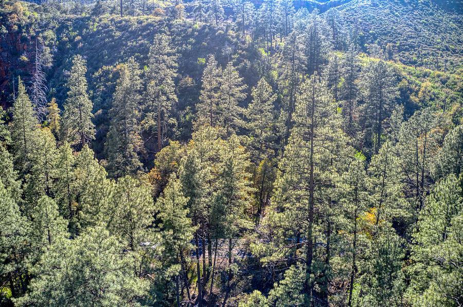 Oak Trees Sedona AZ by Ants Drone Photography
