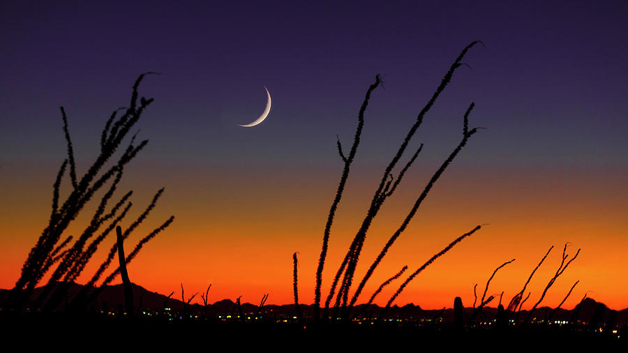 Ocotillo Over Tucson Sunset by Wes and Dotty Weber