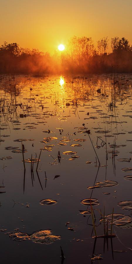 Okefenokee Swamp Sunrise by Stefan Mazzola