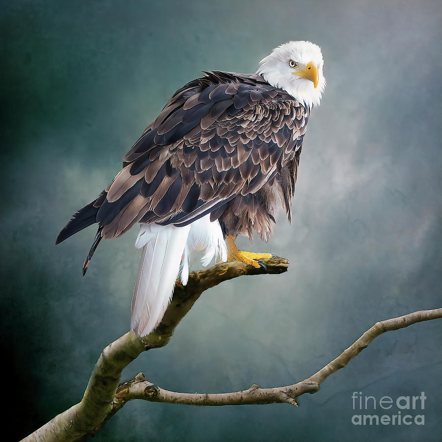 On The Lookout by Brian Tarr