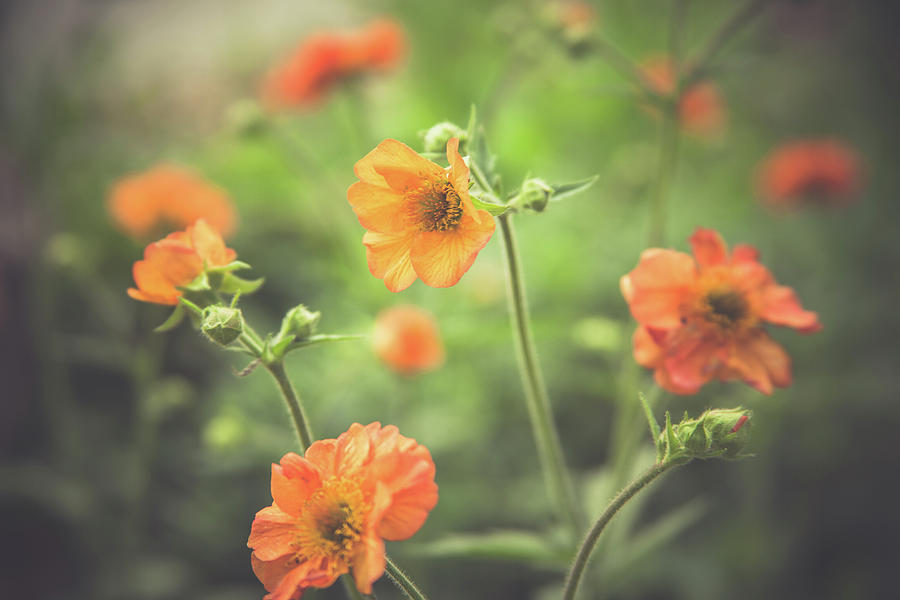 Orange Garden Flowers by Jeanette Fellows