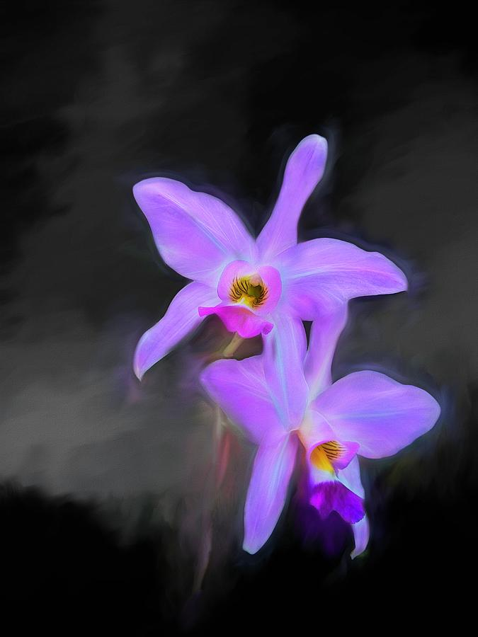 Orchid On Black Photograph