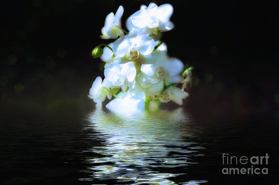 Orchid Reflection by Elaine Manley