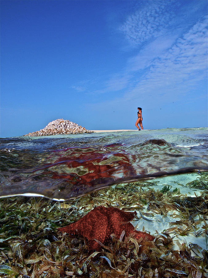 50-50 Photograph - Over/under Coral Reef, Sea Star by Organizacion Bluewater