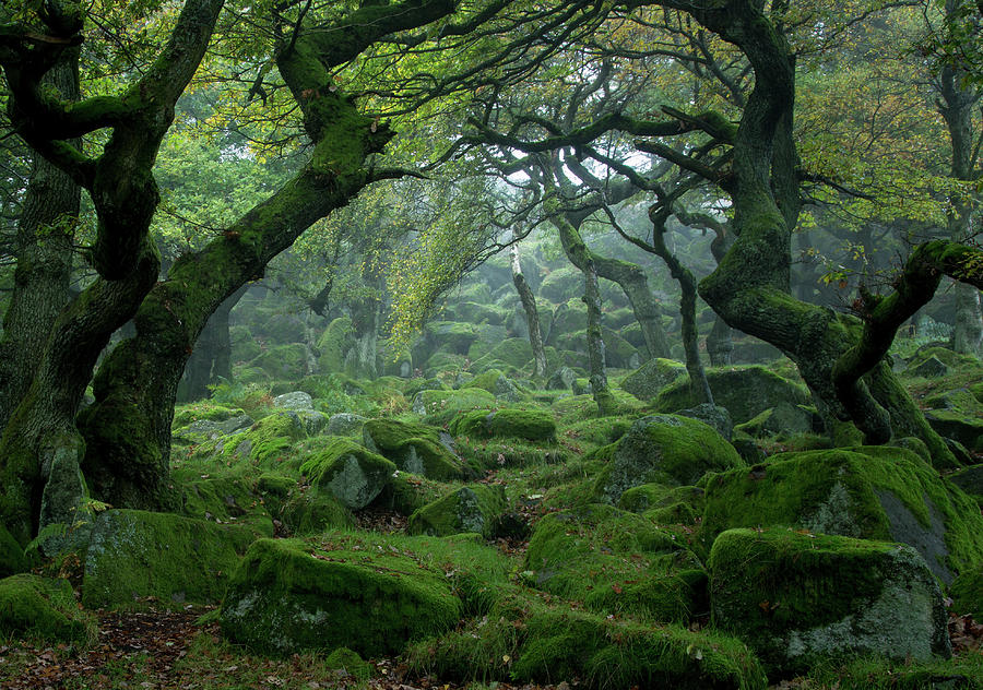 Padley Gorge Photograph by Duncan Fawkes