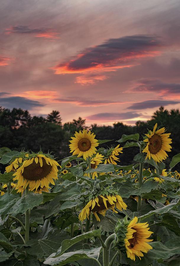 Painted Sky by Darylann Leonard Photography