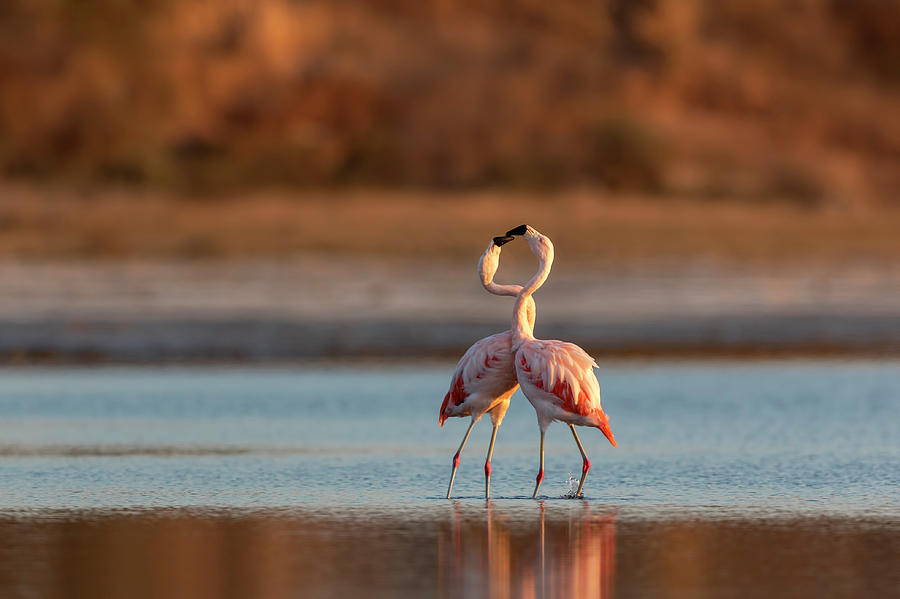Pair of Flamingos  by Pablo Rodriguez Merkel