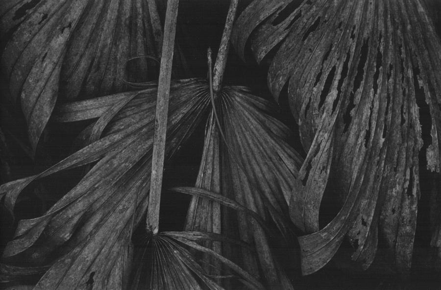 Palm Detail by Michael L Kimble