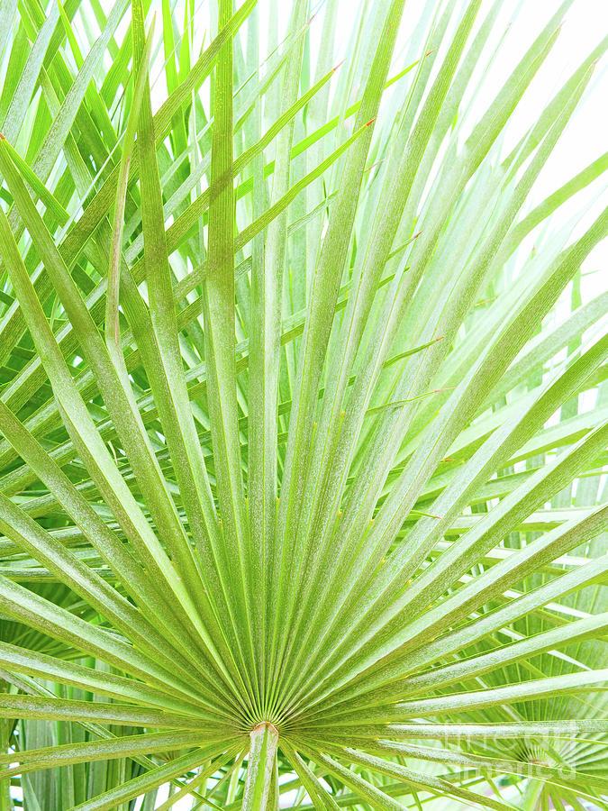 Palm Green Photograph