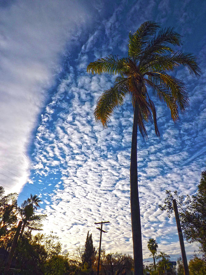 Palm Tree and Clouds by Hold Still Photography