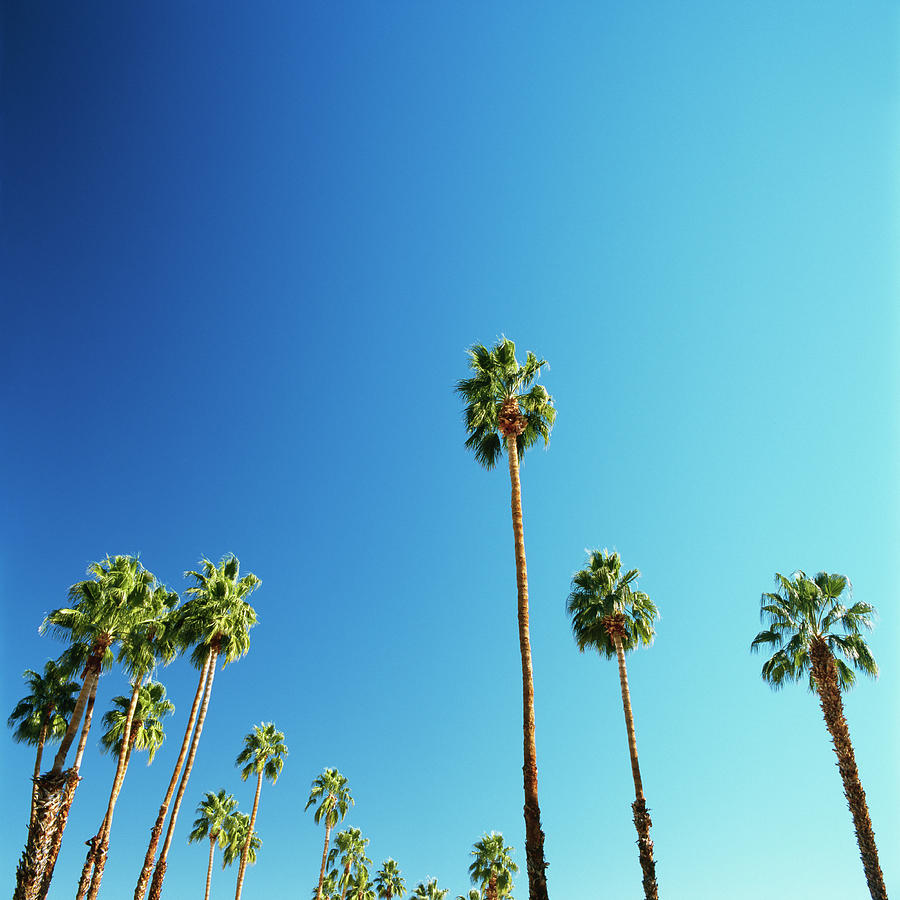 Palm Trees Against Blue Sky Photograph by Micha Pawlitzki