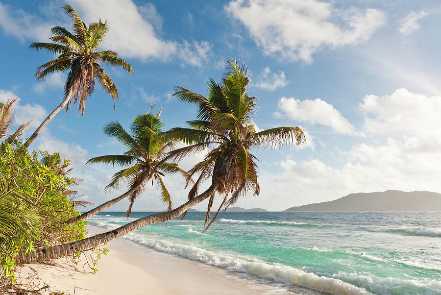 Palm Trees Waving Over Tropical Island Photograph by Fotovoyager