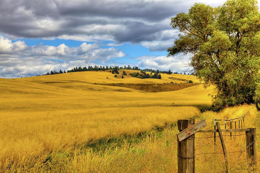 Palouse Farmland by David Patterson
