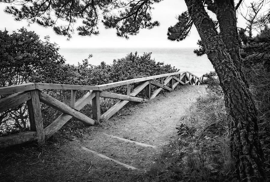 Trail to the Beach by Carolyn Derstine