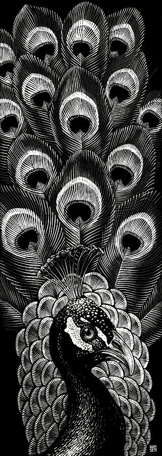 Peacock by Clint Hansen