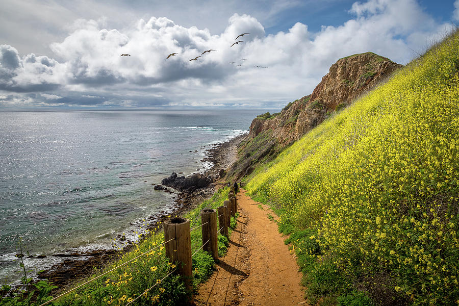 Pelican Cove Super Bloom by Andy Konieczny