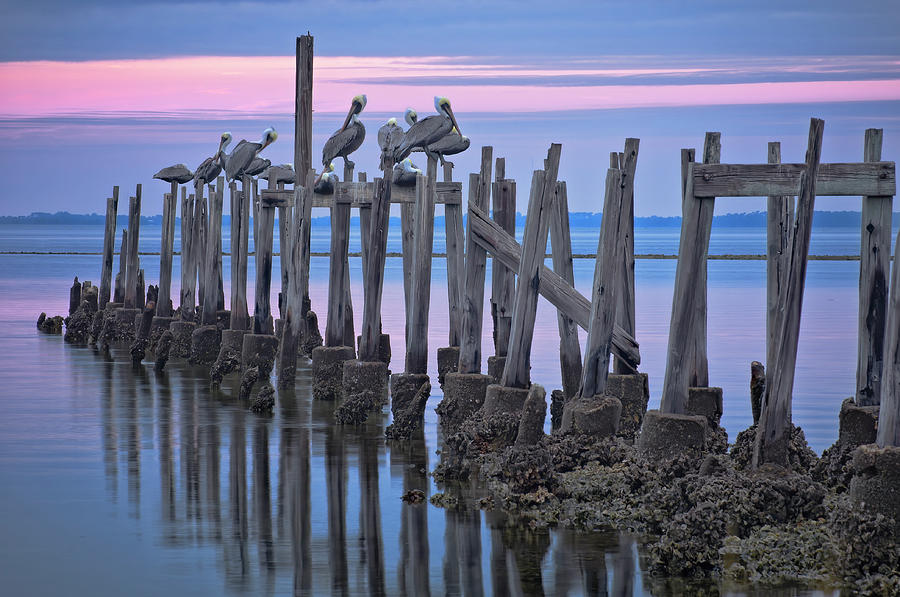Pelicans on Pilings by Bill Chambers