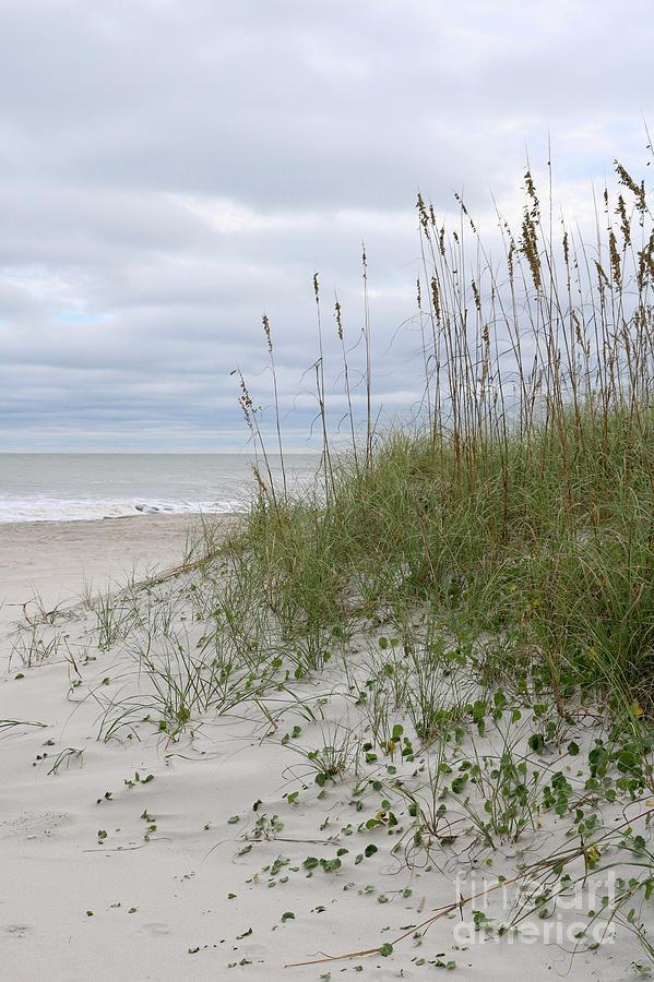 Perfect Beach Day by Carol Groenen