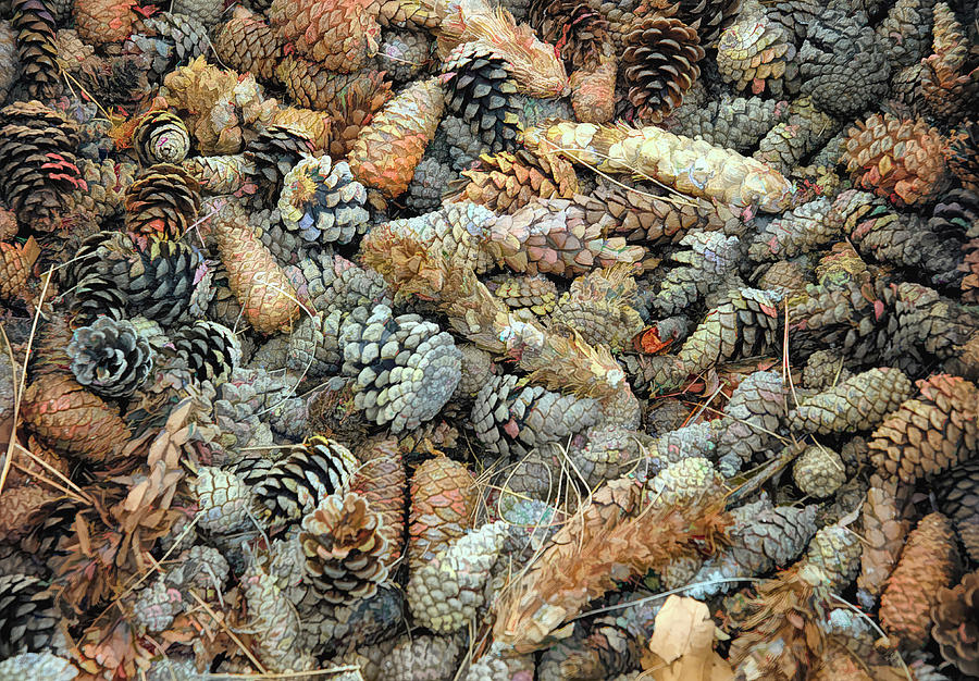 Pine Cones by PAUL COCO