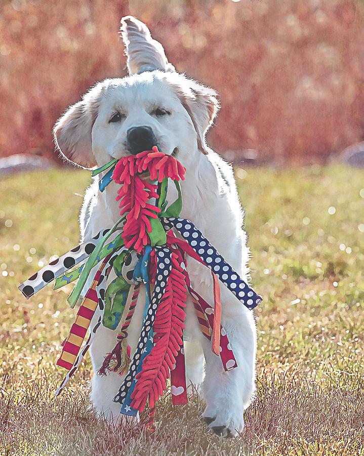 Playful Pup by Jennifer Grossnickle