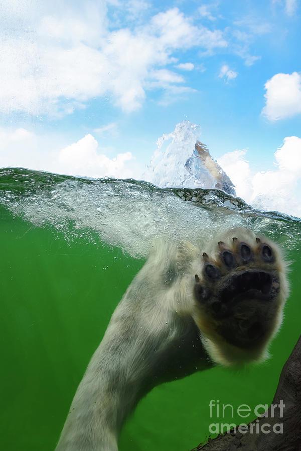 Polar Bear by Angela Doelling AD DESIGN Photo and PhotoArt