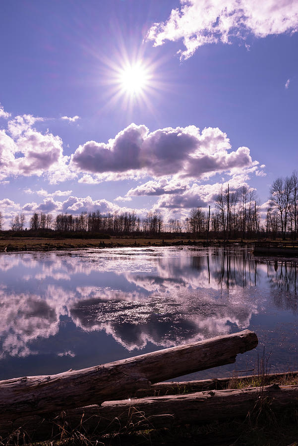 Pond Reflections by Steven Clark