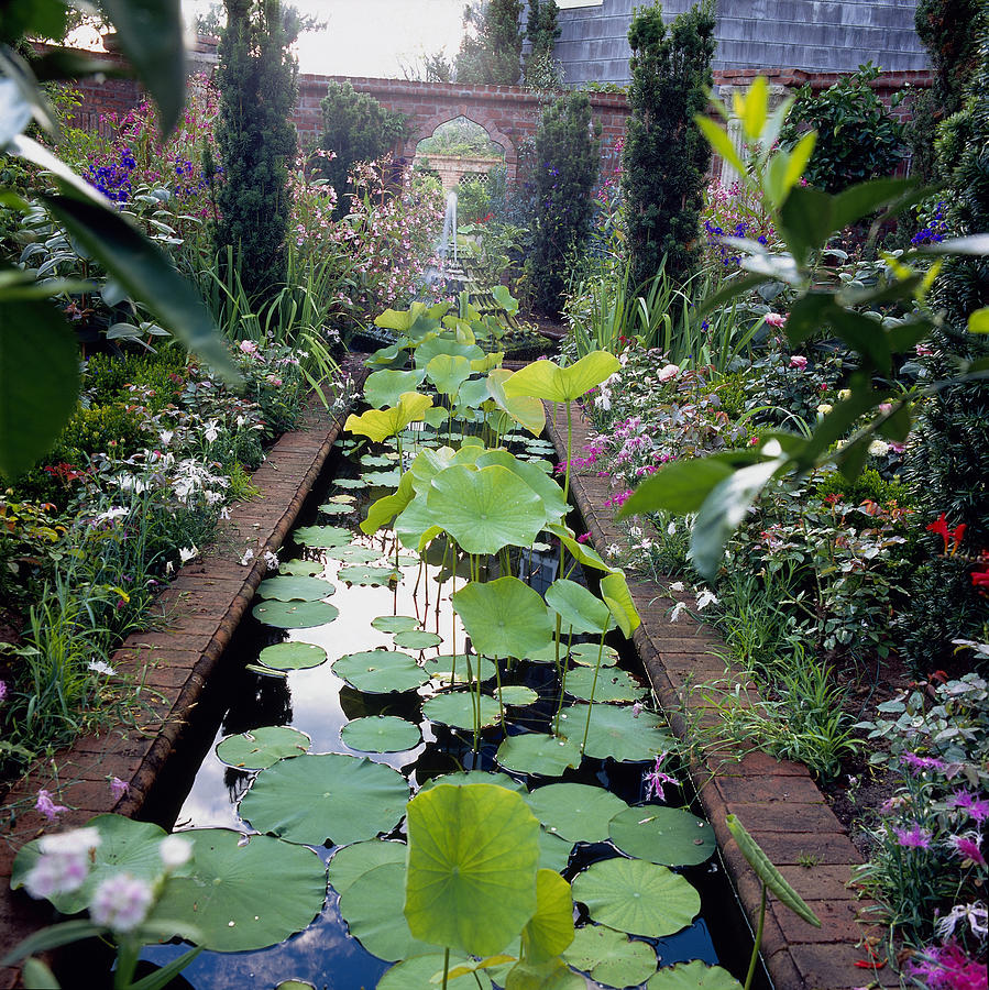 Pond With Lotus Nelumbo Nucifera East Photograph By Richard Felber