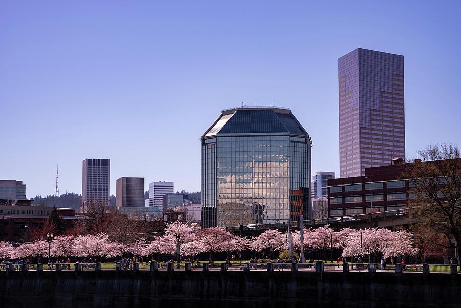 Portland Spring by Steven Clark