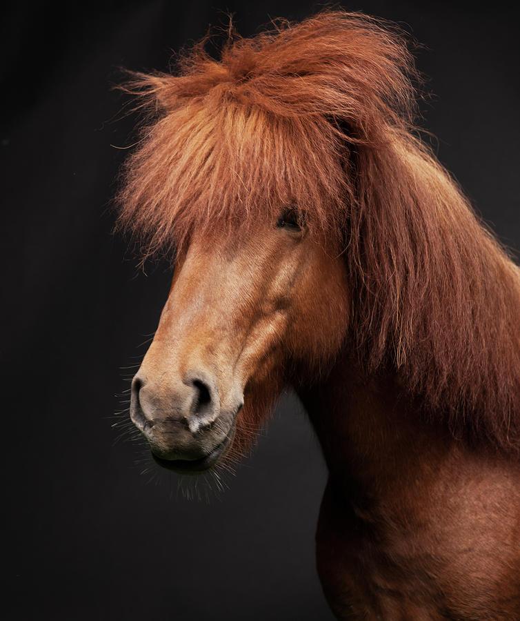 Portrait Of Horse Photograph by Arctic-images