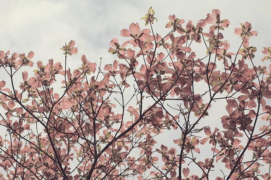 Precious Spring by The Art Of Marilyn Ridoutt-Greene