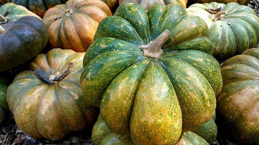 Pretty Pumpkins Photograph