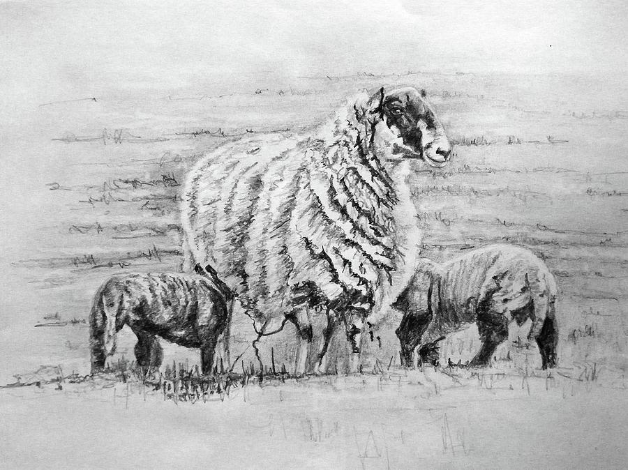 Proud Ewe by Helen White