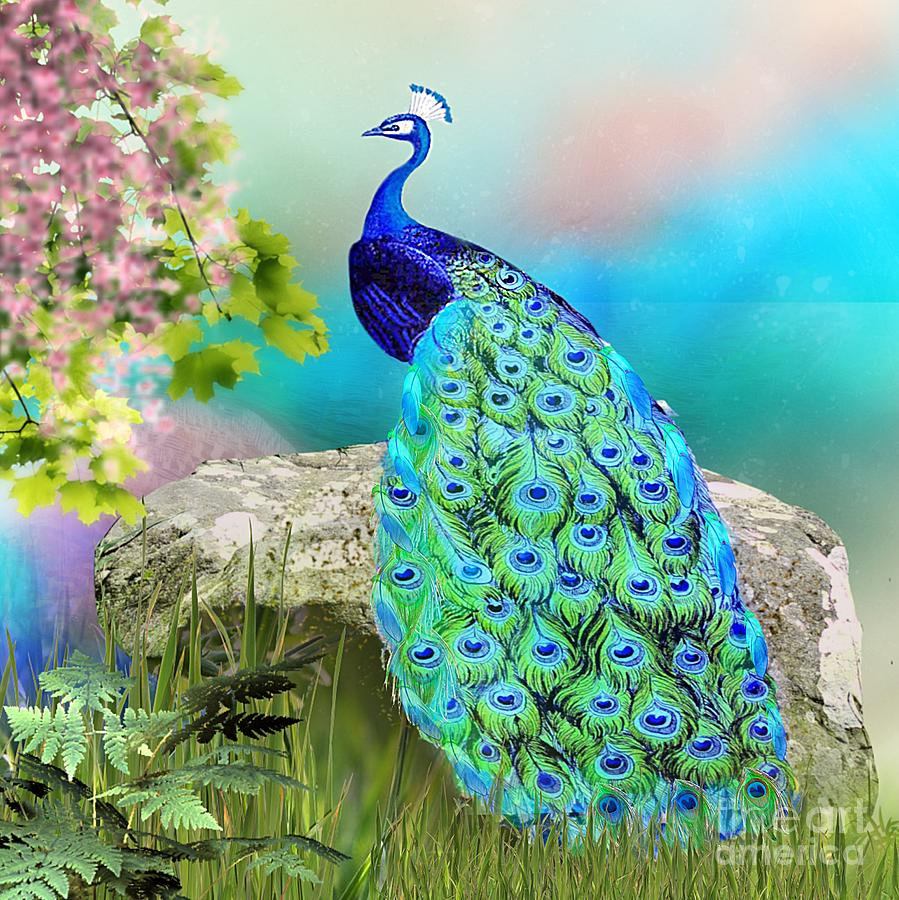 Proud Peacock by Morag Bates