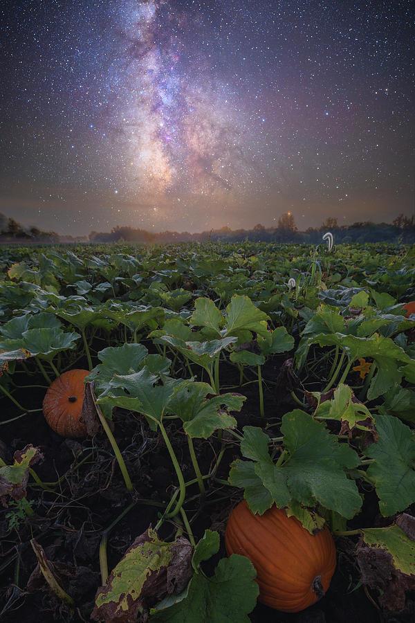 Pumpkin Patch  by Aaron J Groen
