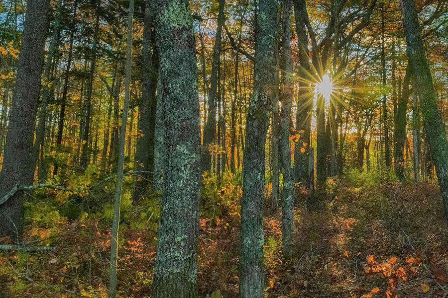 Rachel Carson Photograph - Rachel Carson Wildlife Refuge 1 by Bob Doucette