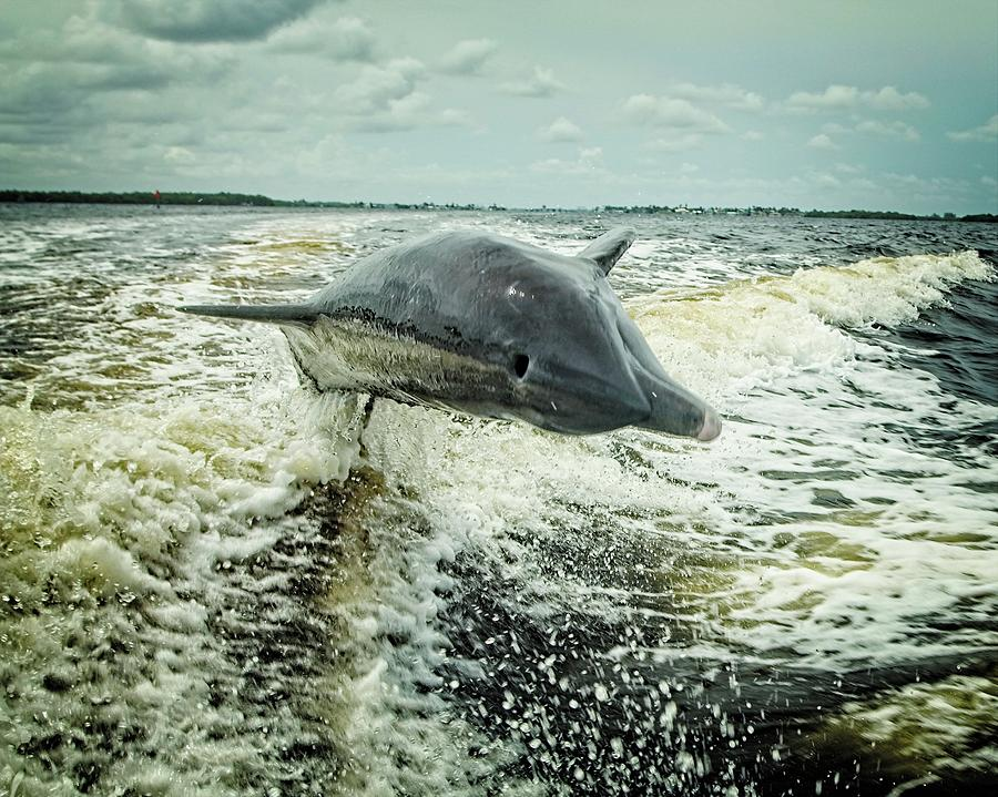 Racing Dolphin by John Bates