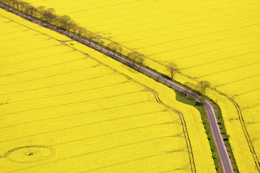 Rape Field Photographed From The Air Photograph by Willi Rolfes